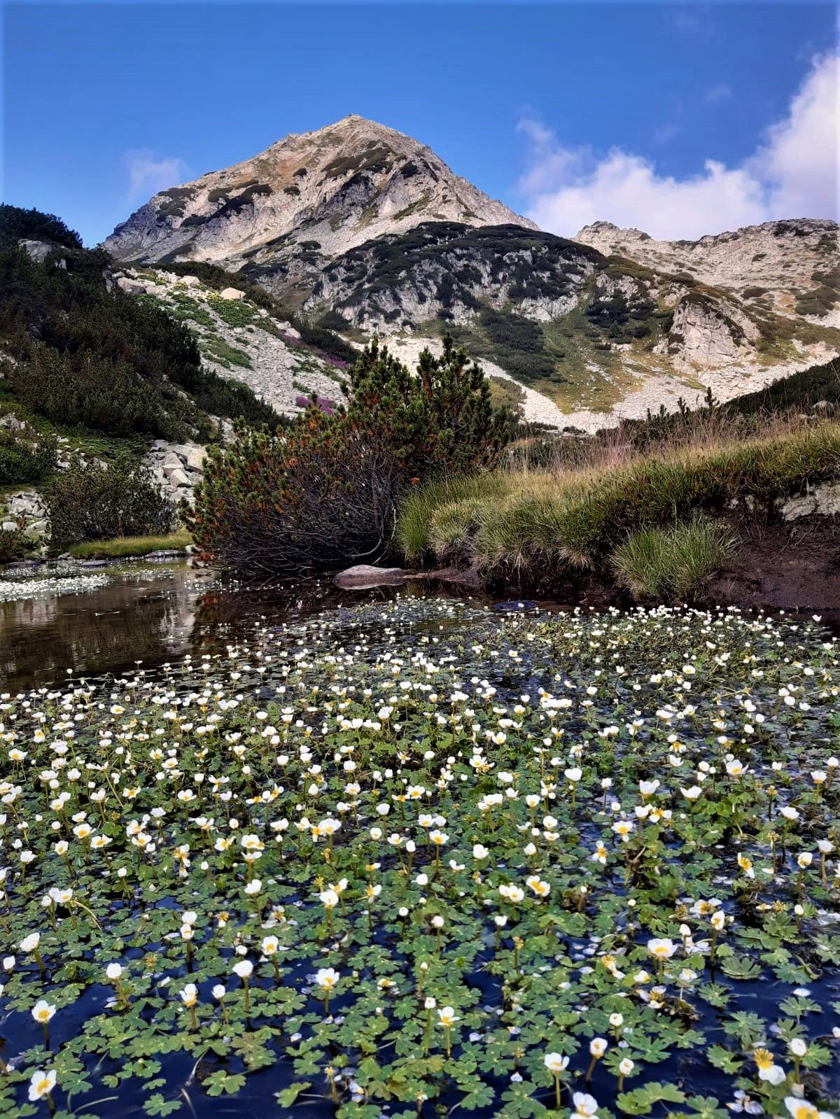Pirin-Rodopi Mountain Trek 25 - Walking Bulgaria