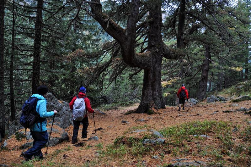 Bansko, Pirin Mountains Adventures (Bulgaria) 10 - Walking Bulgaria