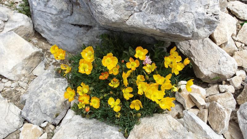 Rila-Pirin Mountain Trek (Bulgaria), guaranteed departures 25 - Walking Bulgaria